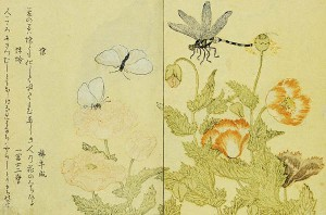 Illustration from A Picture Book of Selected Insects (Butterflies and Flowers) by Utamaro ca. 1788